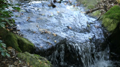 Stream of Water - Peaceful Forest River Running Nature Brook Trees Fresh Creek Stock Footage