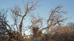 Crane shot of dead woody tree, wide shot, mountains in background. Stock Footage