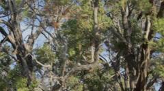 Crane shot of Juniper Tree Stock Footage