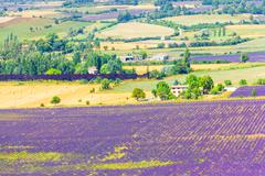 Aerial the lavender fields in provence, france Stock Photos