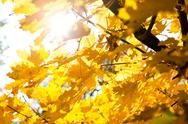 Stock Photo of bright sun and autumn leaves