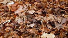 Old autumn leaves - stock footage