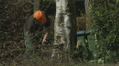 Arborist lumberjack cuts a wedge in the base of a tree 01 Stock Footage