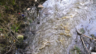 Stock Video Footage of Water pollution. Waste water flowing and polluting environment.
