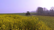 Stock Video Footage of Rapeseed harvesting to enrich the soil.
