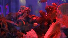 Aquarium water world Stock Footage