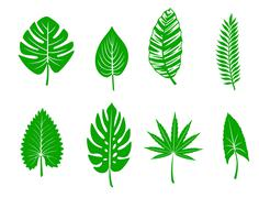 Green tropical leaves Stock Illustration