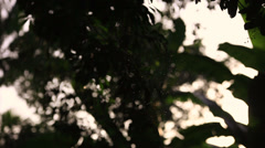 Tropical insects flying. Stock Footage