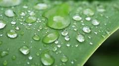Close up water drops on green leaf Stock Footage