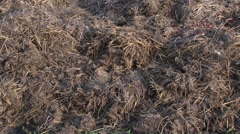 Humus manure with grass Stock Footage