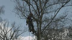 Arborist lumberjack in tree preparing to cut it down Stock Footage