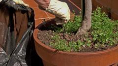 Gardener weeding,  jm0337 - stock footage
