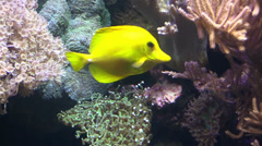 Aquarium fish HD Stock Footage