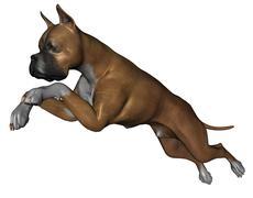 Stock Illustration of boxer dog
