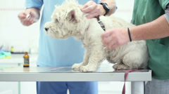 Pet Clinic Man Doctor - stock footage