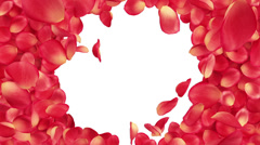 Beautiful Rose-petals transition. Useful for greetings and gifts. - stock footage