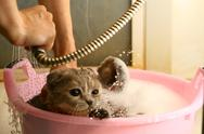 Stock Photo of wash cat