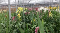 greenhouse flowers growing perfect loop - stock footage