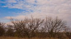 Autumn oak forest scene Stock Footage