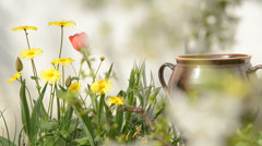 Flowers in the garden with chery blossom Stock Footage