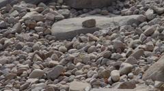 Pebble rannalla. Arkistovideo