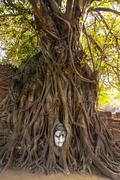 buddha head at ayuthaya - stock photo
