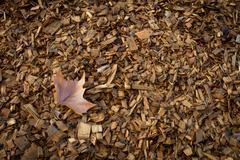 Autumn leaf and wood chips Stock Photos