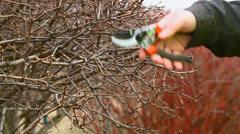 Man pruned bushes Stock Footage