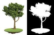 Stock Illustration of Garden Tree Isolated on White Background.