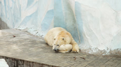 Mother of polar bear with her cub Stock Footage