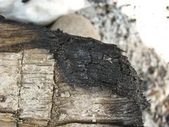 close-up of burning tree - stock photo