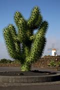 Plastic cactus windmills in  isle of lanzarote africa spain Stock Photos
