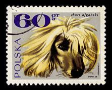 Poland-circa 1969:a stamp printed in poland shows image of the afghan hound i Stock Photos