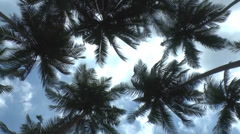 Cluster of Palm Trees Stock Footage
