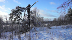 Broken tree in winter forest at sunset Stock Footage