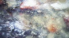 Orange stones under ice, Lososinka river, Karelia Stock Footage