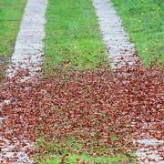 Access road to villa covered with leaves Stock Photos