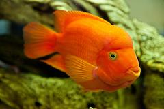 Tropical freshwater aquarium Stock Photos