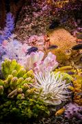 Ttropical freshwater aquarium with fishes Stock Photos