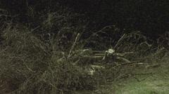 Arborist lumberjack in tree throws branch to the ground 03 4K Stock Footage