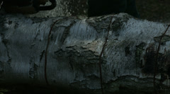 Arborist lumberjack cuts fallen tree trunk into rounds 02 4K Stock Footage
