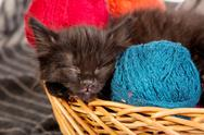 Stock Photo of Black kitten playing with a red ball of yarn on white background