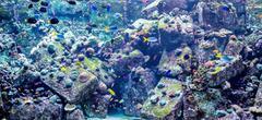 Aquarium tropical fish on a coral reef Stock Photos
