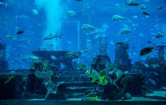 Stingray fish. Aquarium tropical fish on a coral reef Stock Photos