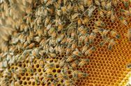 Closeup swarm of honeycomb on tree. Stock Photos