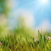 Stock Illustration of bright summer afternoon. natural backgrounds