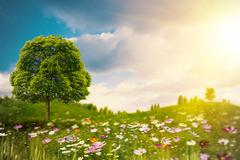 bright summer afternoon on the meadow. natural backgrounds - stock illustration