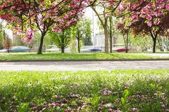 Spring blossoms with blured car in motion Stock Photos