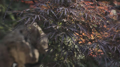trees and rocks  in Yuyuan Garden - stock footage
