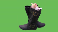 Puss In A Boots Stock Footage